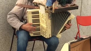 Dog Sleeps Soundly On Accordion