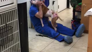 Smokey's Reunion at Jupiter Pet Emergency and Specialty Center - Video