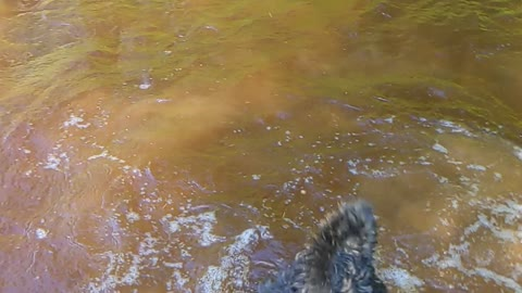 Slow motion pups in the water