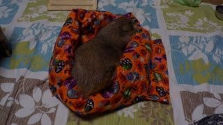 Belyashik was presented with a blanket for his birthday