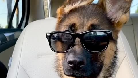 This puppy is cooler than you could ever be