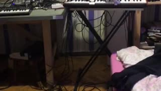 Cat Playing Horrifying Music on Synthesizer
