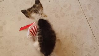 Just a Small Kitten Loves ur New Toy