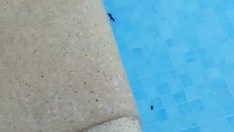 Ant Throws Another Ant Into Pool