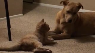 Cat and dog making out