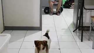 This Puppy Will Help You Work Out - Video
