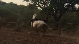 Guy riding horse and falling off from it - Video