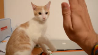 Cat Give His Human Friend High-Fives