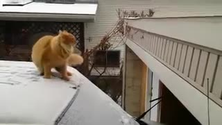 Failed to jump a cat