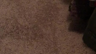 Cat plays with food under dresser - Video