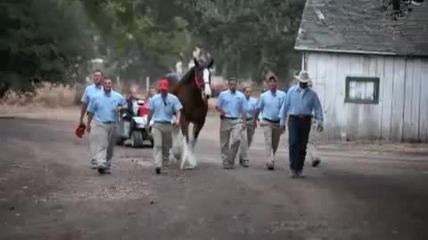 He Asked 11 Horses To Stand In Line. Now Watch What The One In The Middle Does! WHOA!