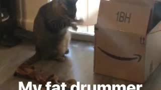 Big Cat Keeps Beating On Box Flap Like A Drum - Video
