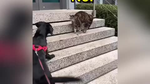 Angry cat not interested in making new doggy friend