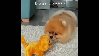 Dog Small Afraid Of Dog Game