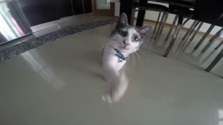 My Cat doesn't Like my Gopro - Video
