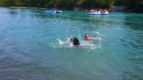 Dog's first swimming experience is absolutely priceless!