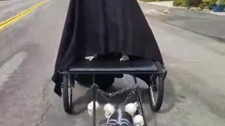Terrifying dog shows off his epic Halloween costume - Video