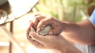 Tiny pet squirrel loves a good belly rub - Video