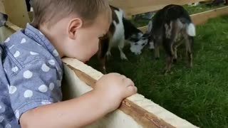 Collab copyright protection - petting zoo boy head stuck on gate - Video