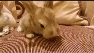 Our New Guests (Little Rabbits) - Video