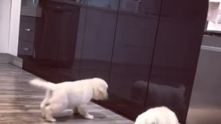 Puppy Hilariously Fights His Reflection In The Cupboard