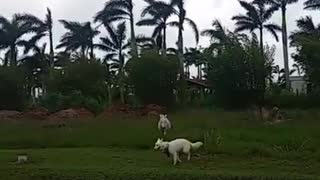 Dog has the time of his life while running around with donkey - Video
