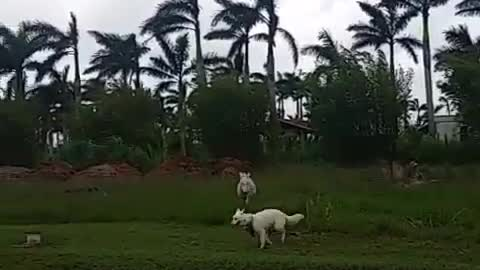 Dog has the time of his life while running around with donkey