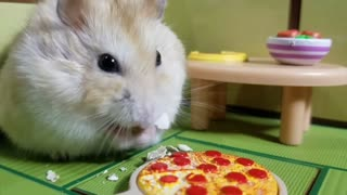 Pampered hamster enjoys awesome pizza party - Video