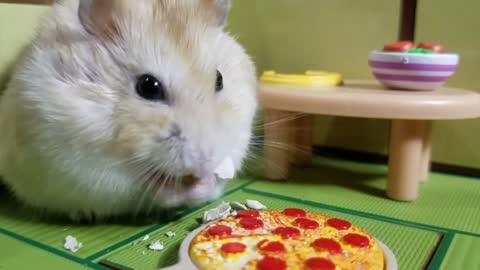Pampered hamster enjoys awesome pizza party