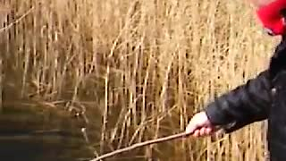 A Big Black Fish Trying to Catch A Small Fish