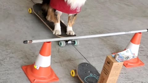 Skilful Doggy Snatches Banknote From Precarious Stack