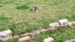 Cat Loves Fetching Clothesline Pin
