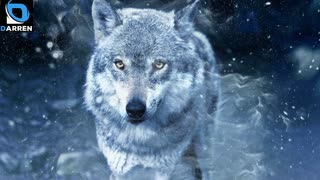 6 Photo Of Wolves
