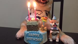 Chiko Birthday  - Video