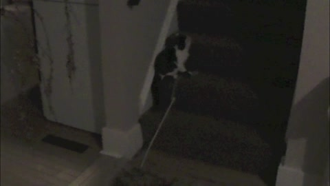 This kitten's favorite game will surprise you!