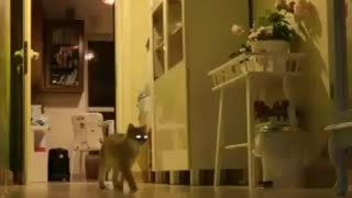 NIght Vision Camera to show what my Cats Doing in the Night