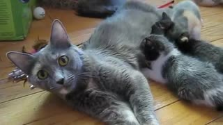 Mama Cat Calls Her Kittens For Lunch, But The Way She Does It Is So Adorable! - Video