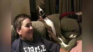 An Adorable Dog Watching TV - Video
