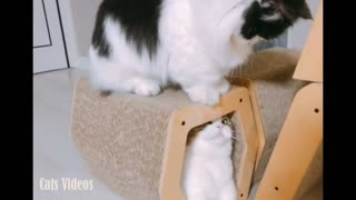 A cat with another cat - Video
