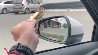 Sparrow Deftly Steals Fry from Friend