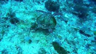 Big Water turtle Head Up Iam Diving To You