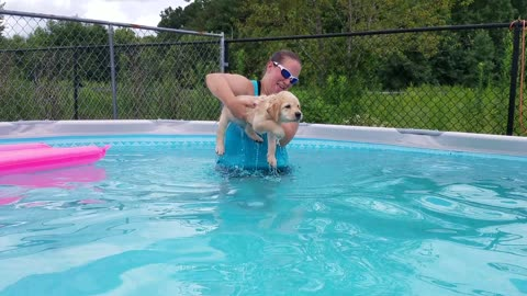 Puppy held above water continues air swimming