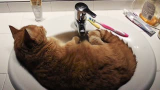 Cat decides to chill out in bathroom sink - Video