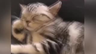 Sleeping animals 2