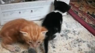 Adorable Cat Teach Her Kitties How to Climb up to The House