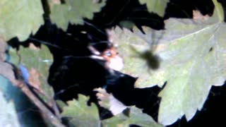 A spider is trying to hide  - Video