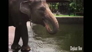 Elephant Drink Water from The lake