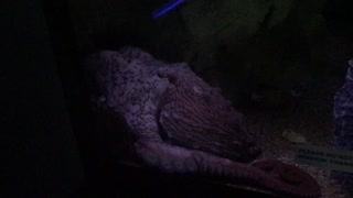 Calming Color Changing Octopus