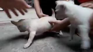 The newest cute puppy  - Video