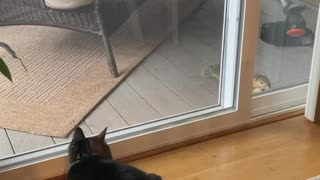 Cat meets squirrel but can't get to squirrel.